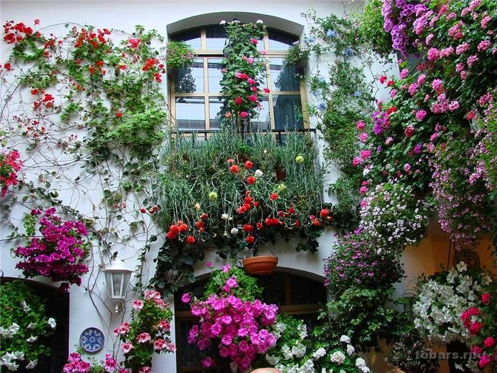 Ибрагим афеллай и роз